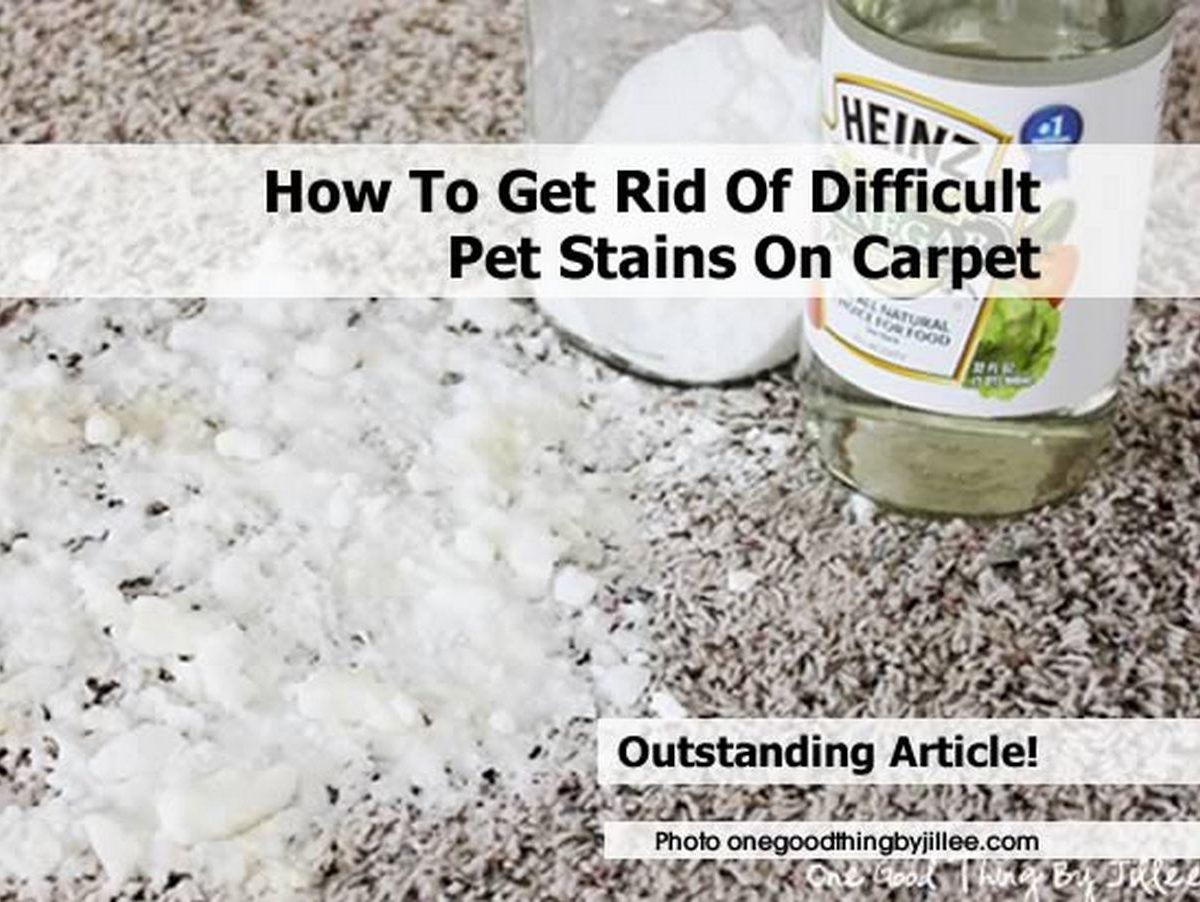 How to get rid of difficult pet stains on carpet - Tips cleaning carpets remove difficult stains ...