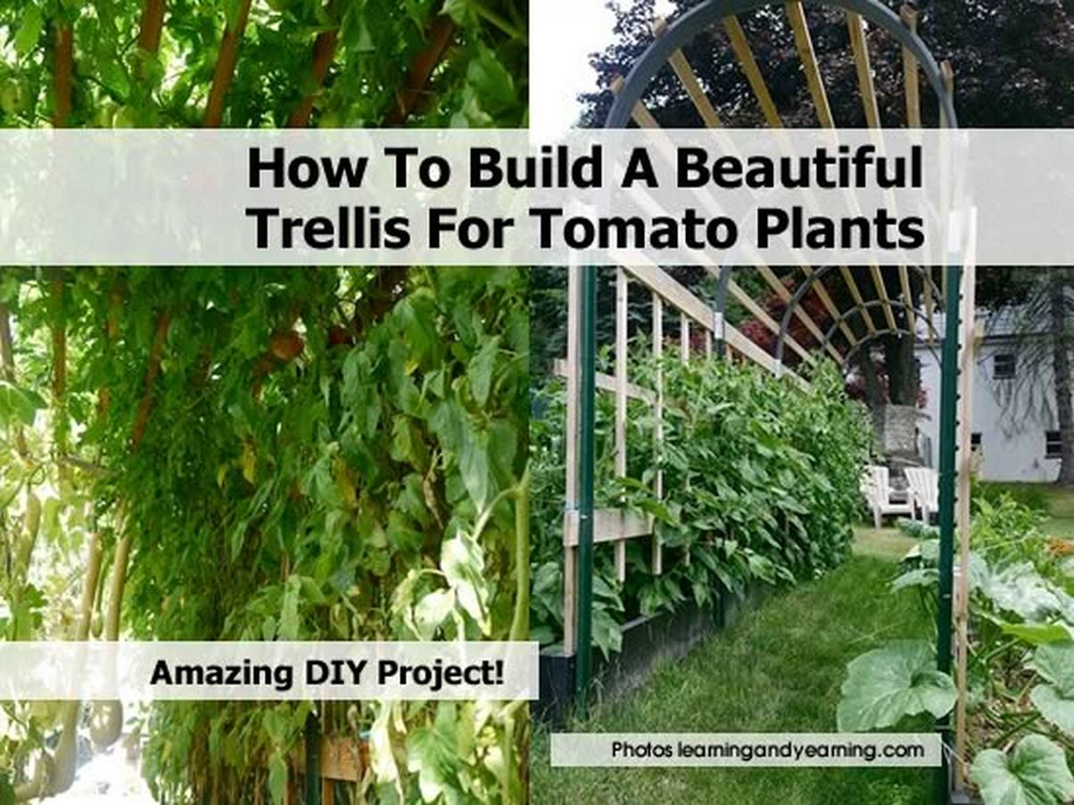 How To Build A Beautiful Trellis For Tomato Plants