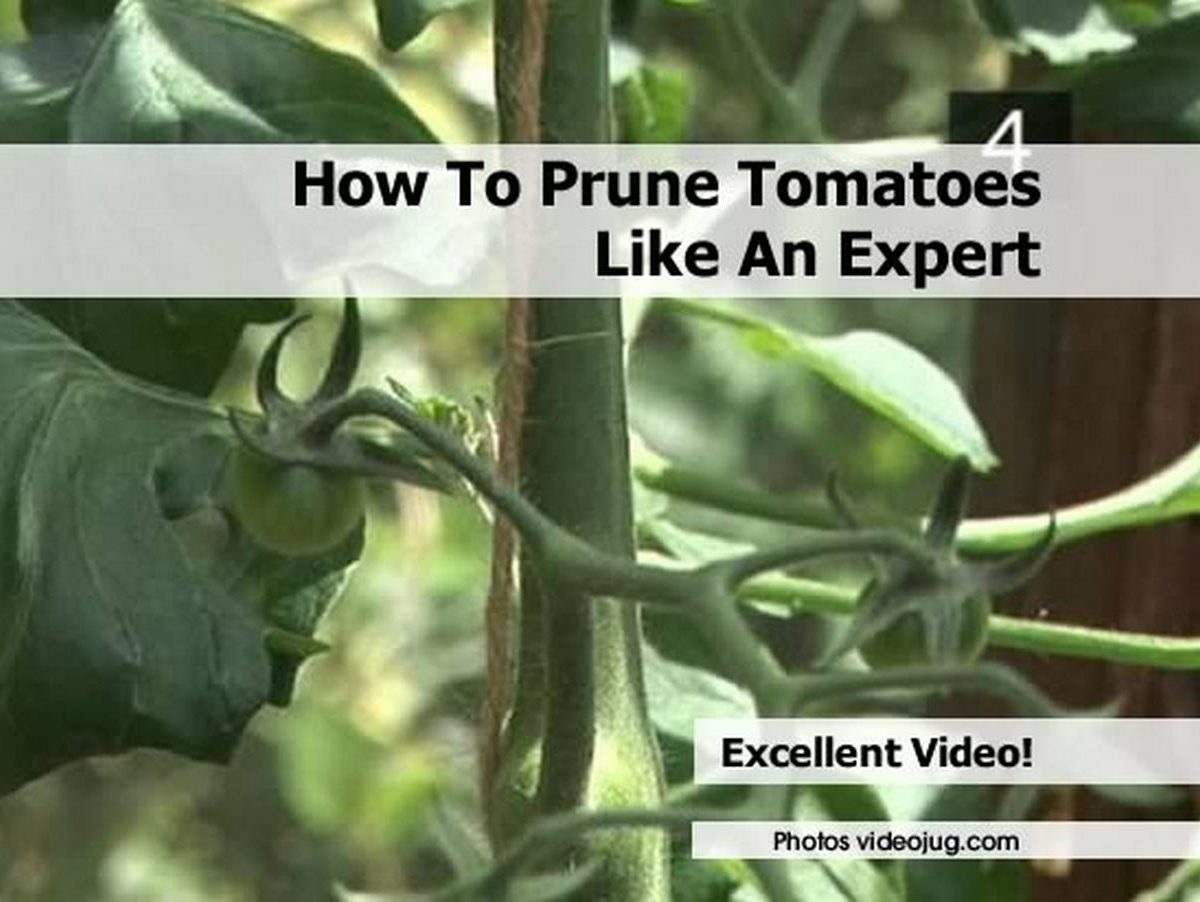 How To Prune Tomatoes Like An Expert