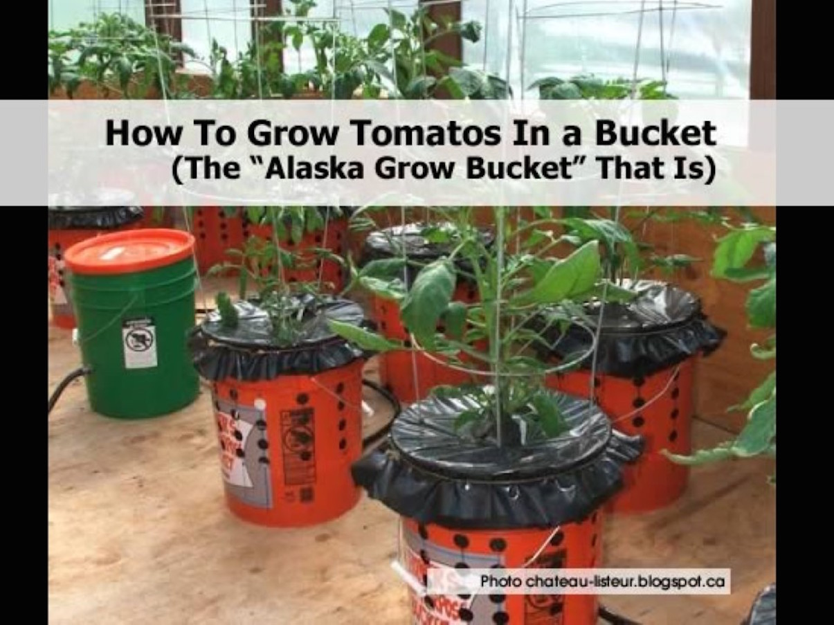 2-alaska-grow-bucket-a