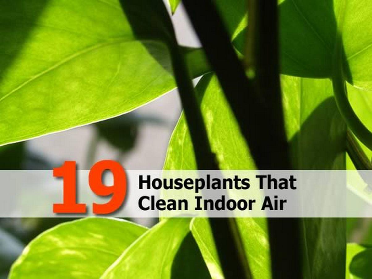 Fresh Indoor Air 19 Houseplants That Cl...