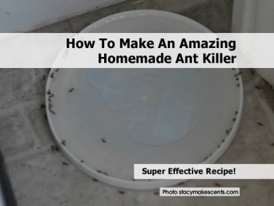 4-ant-bait-killer