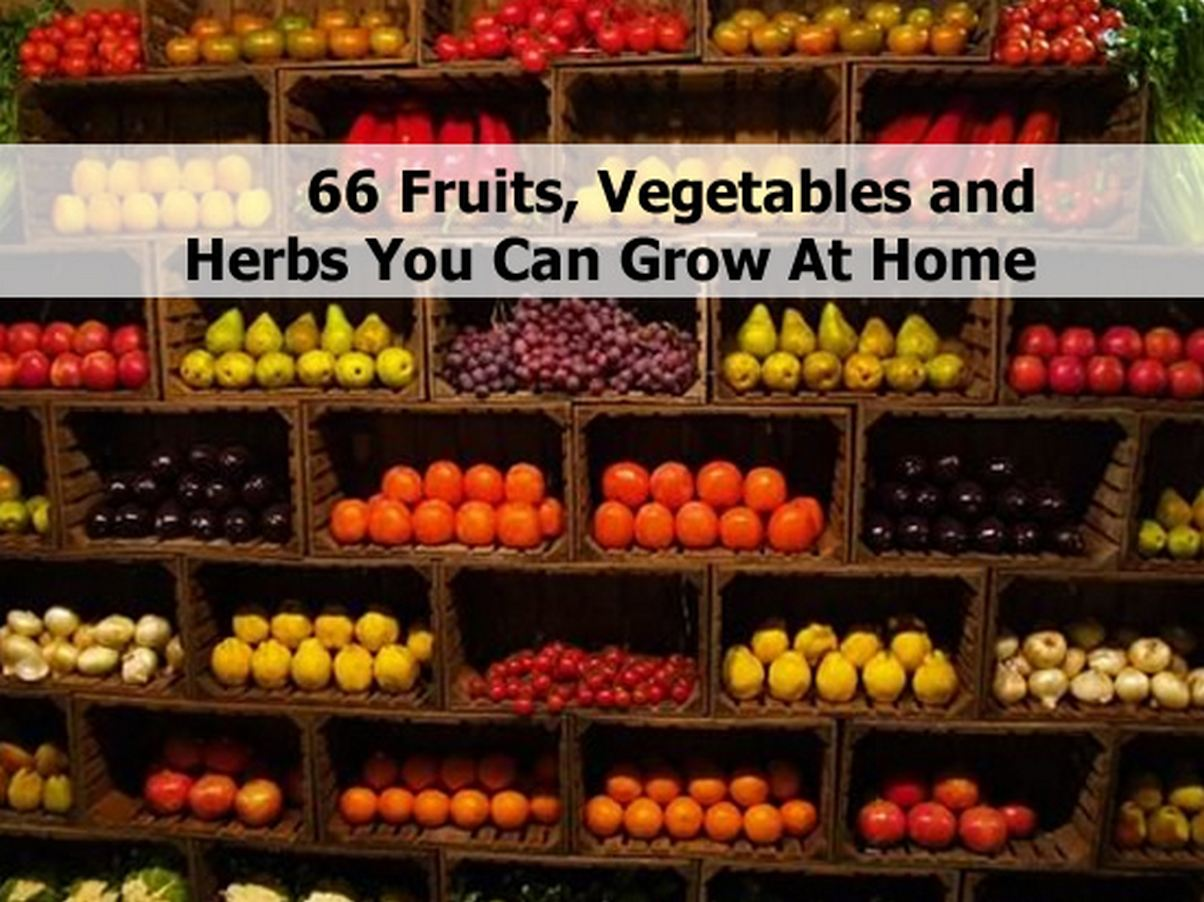 66 Fruits Vegetables And Herbs You Can Grow At Home