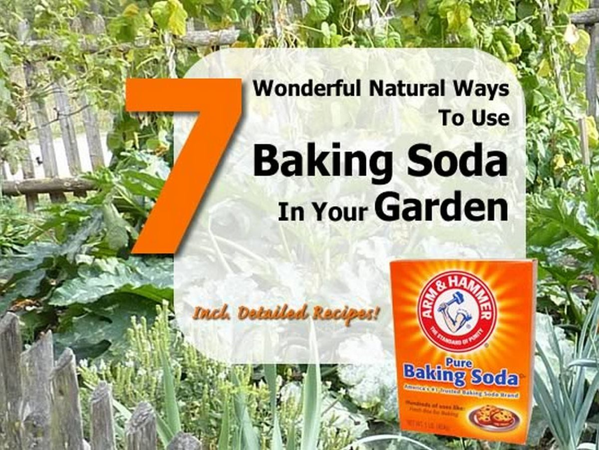7 wonderful natural ways to use baking soda in your garden. Black Bedroom Furniture Sets. Home Design Ideas