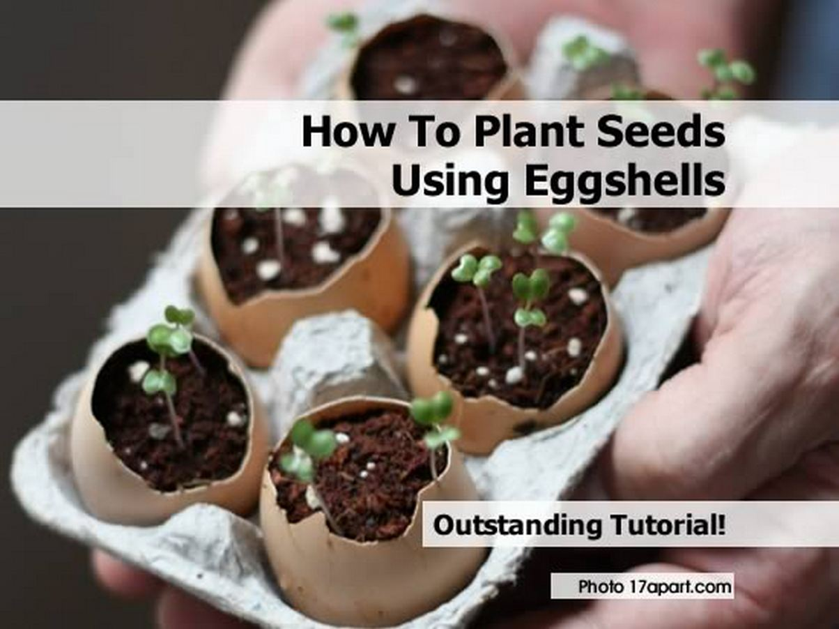 Eggshell-planters-seedlings-by-17apart-com