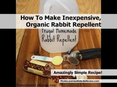 How To Make Inexpensive Organic Rabbit Repellent