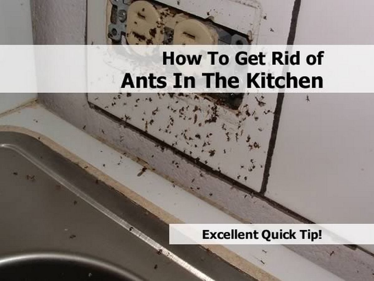 how to get rid of ants in the kitchen. Black Bedroom Furniture Sets. Home Design Ideas