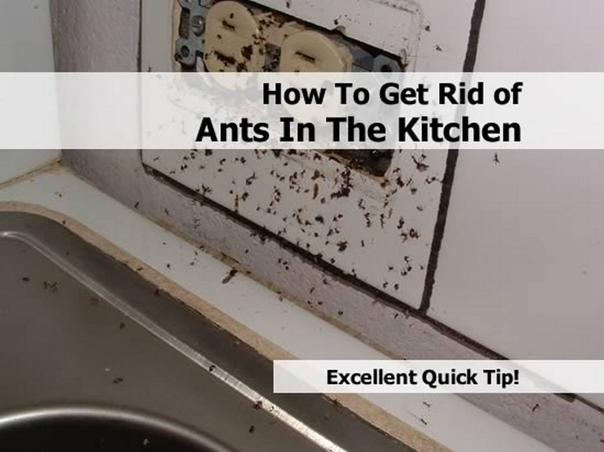 How To Get Rid Of Black Ants In Kitchen