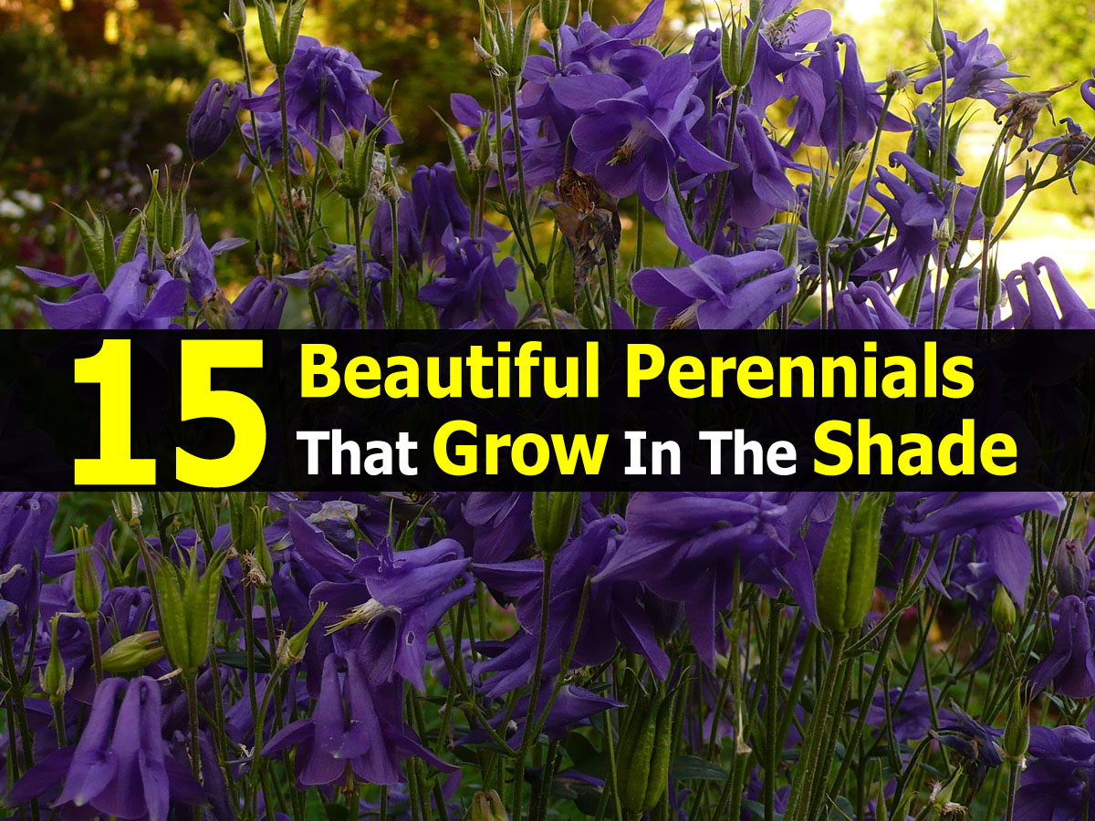 Todo lo que usted desea saber sobre los perennials parte 1