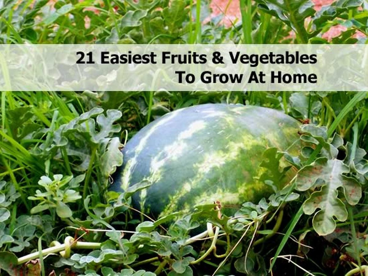 21 easiest fruits vegetables to grow at home for What vegetables to grow