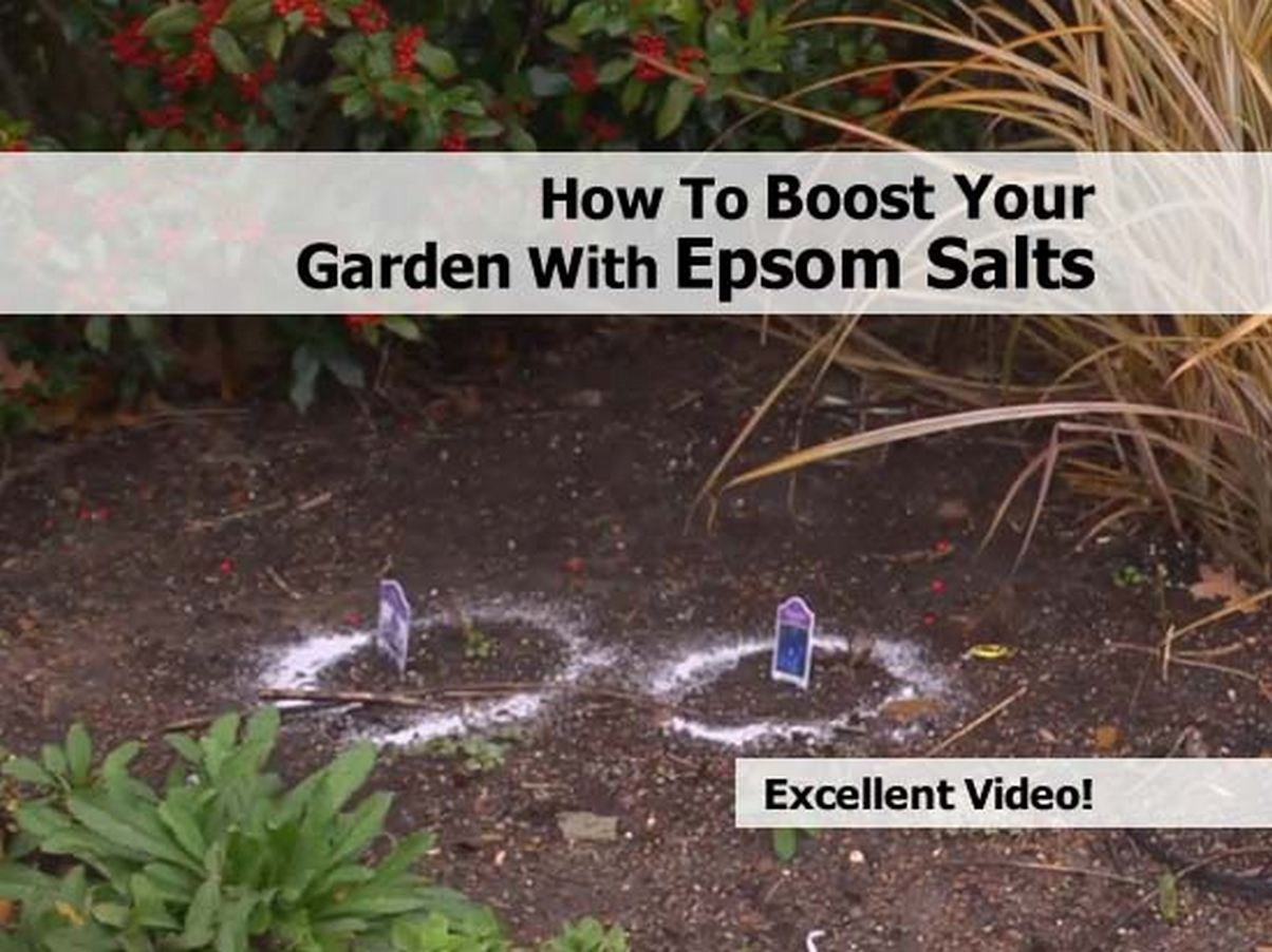 How To Boost Your Garden With Epsom Salts