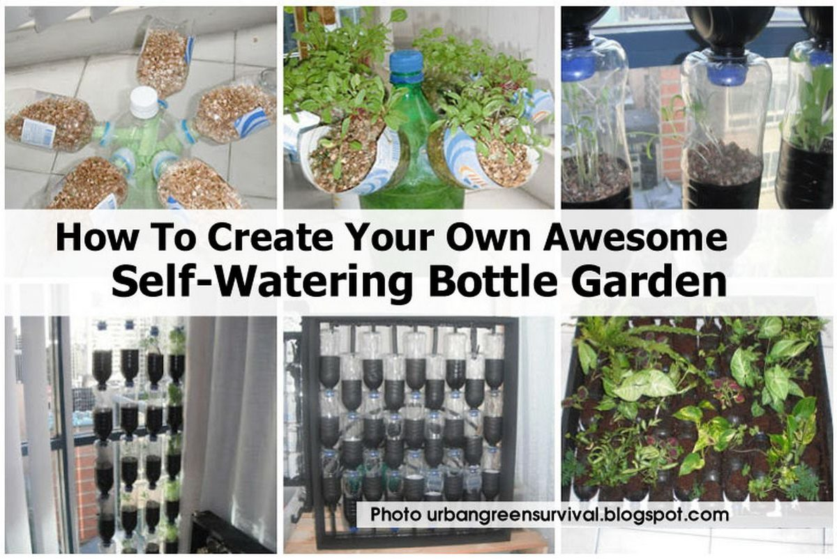 How to create your own awesome self watering bottle garden for How to water a garden