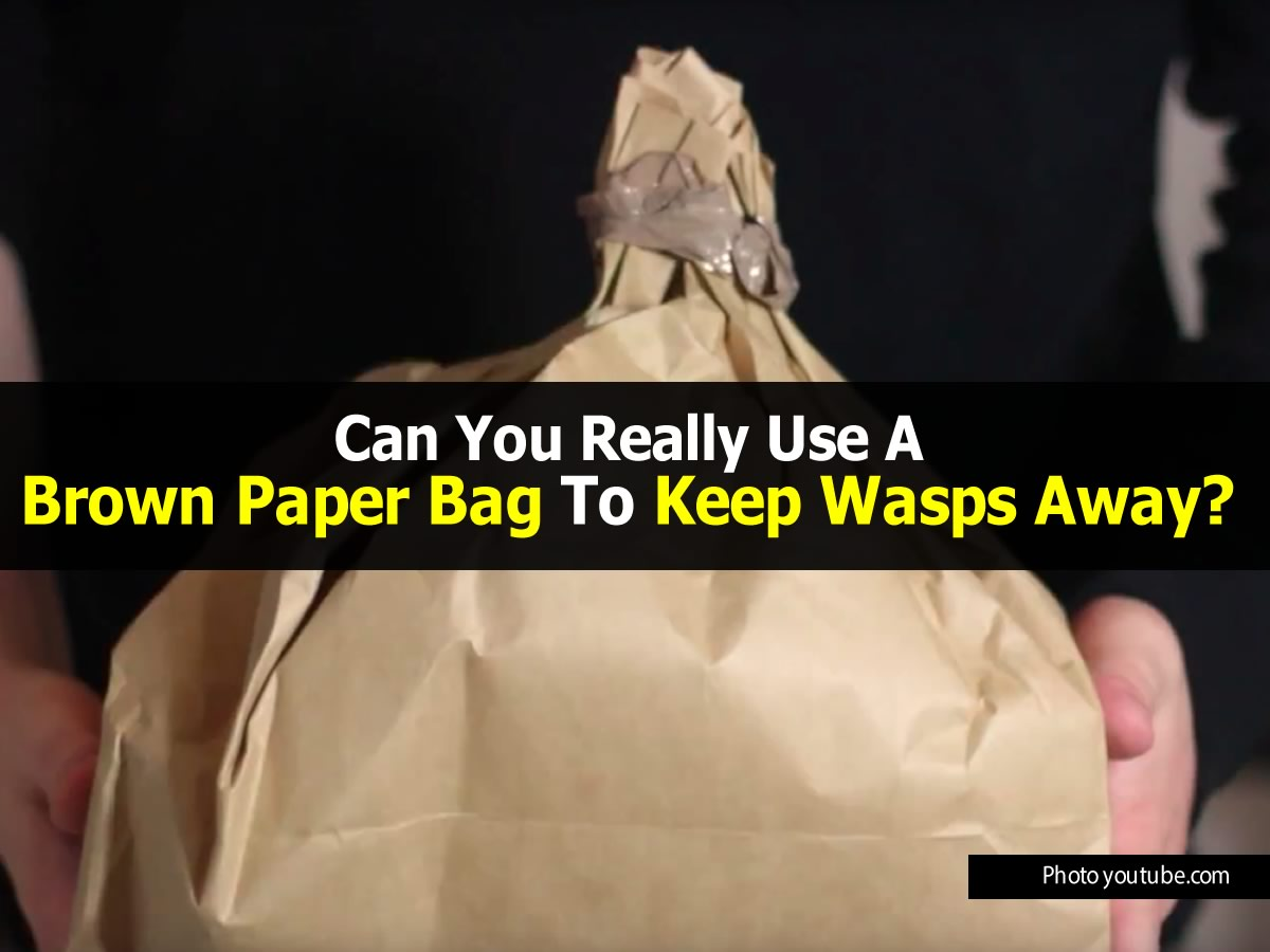 brown-paper-bag-vs-wasps