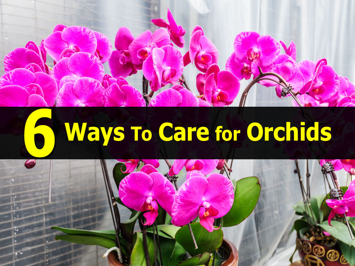 Top 28 How To Take Care Of Orchids How To Take Care