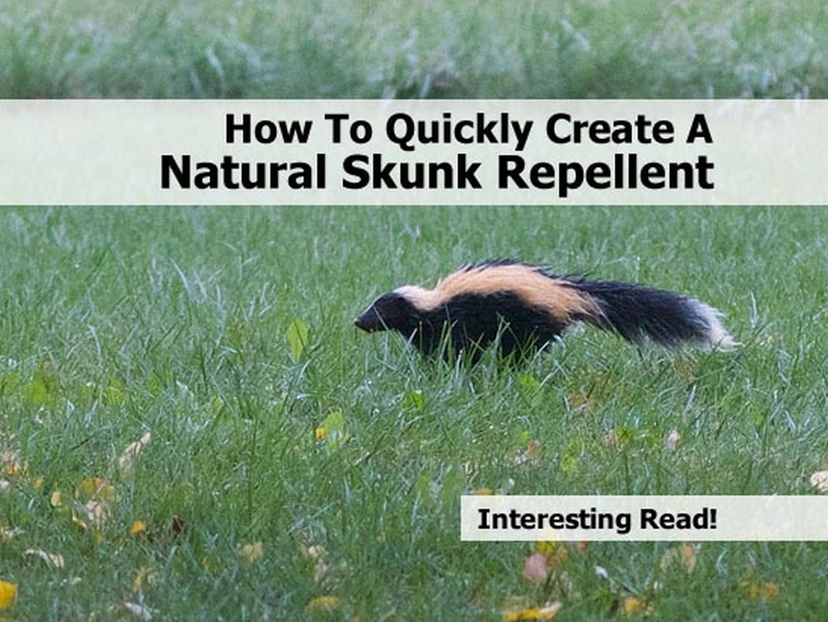 how to get rid of skunk in backyard 28 images how do