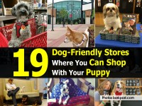 dog-friendly-stores-barkpost-com