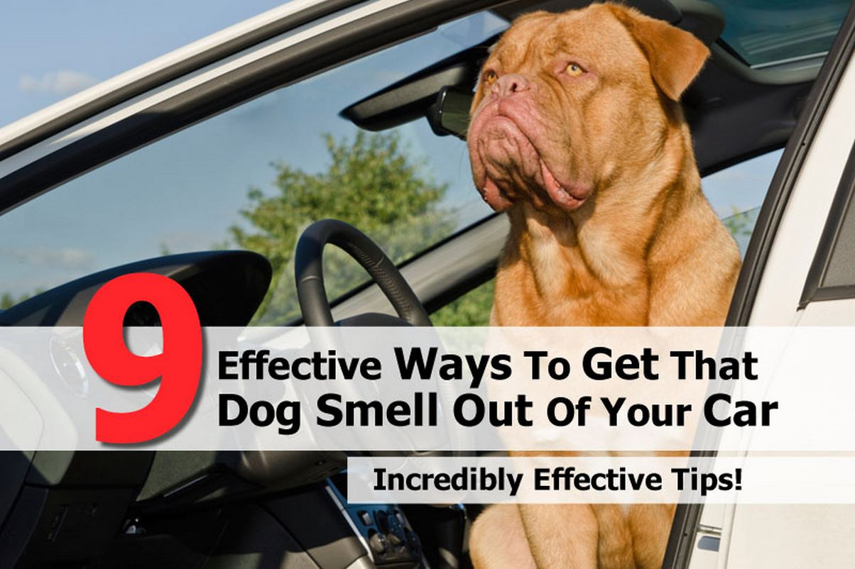 9 effective ways to get that dog smell out of your car. Black Bedroom Furniture Sets. Home Design Ideas