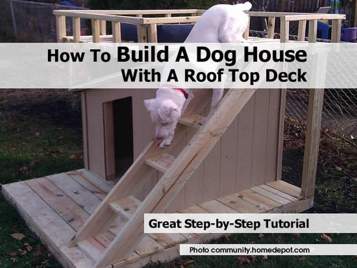 dog in a house 25 dog house ideas for your loving pet Build Your Own Dog House Designs Html on ultimate dog house, makeshift dog house, build your home, cat dog house, world's best dog house, do it yourself dog house, a-frame dog house, build dog house in pen, design your own dog house, build your house plan, plastic dog house, build easy dog house, animals in dog house, plans dog house, customize your own dog house, cars dog house, build my own hobbit house, best shooting house, bacon dog house, shop dog house,