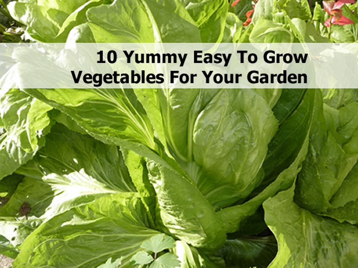 10 yummy easy to grow vegetables for your garden for Easiest vegetables to grow