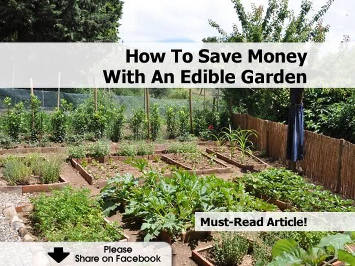 How to save money with an edible garden - Money saving tips in gardening ...