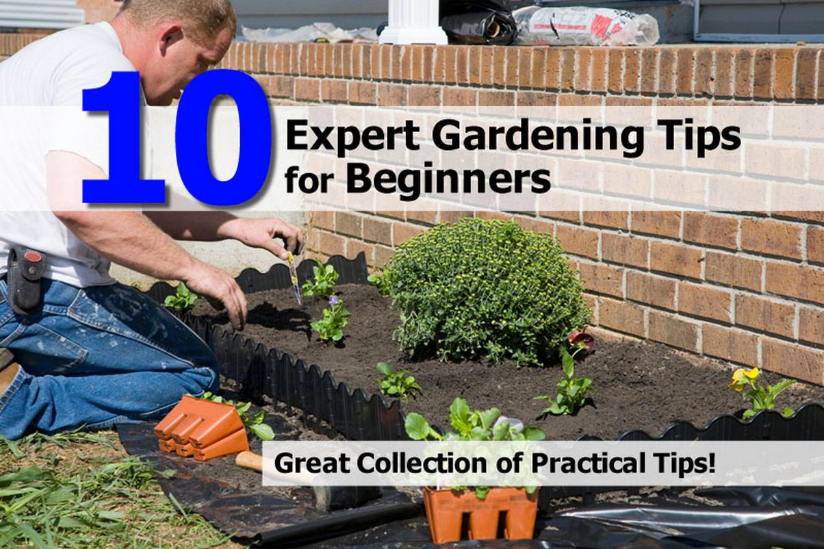 House gardening ideas for beginners photograph 10 expert g for Gardening tips