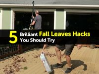 5 Brilliant Fall Leaves Hacks You Should Try