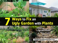 7 Ways to Fix an Ugly Garden with Plants