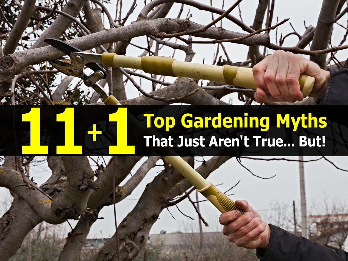 gardening-myths