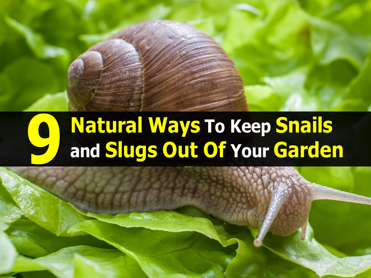 9 natural ways to keep snails and slugs out of your garden - How to get rid of slugs in garden ...