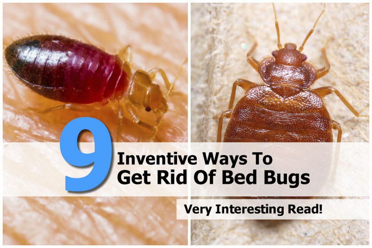 9 Inventive Ways To Get Rid Of Bed Bugs