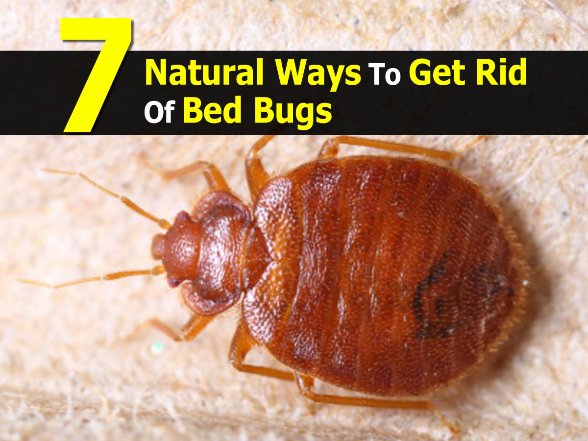 Natural Products To Get Rid Of Bed Bugs
