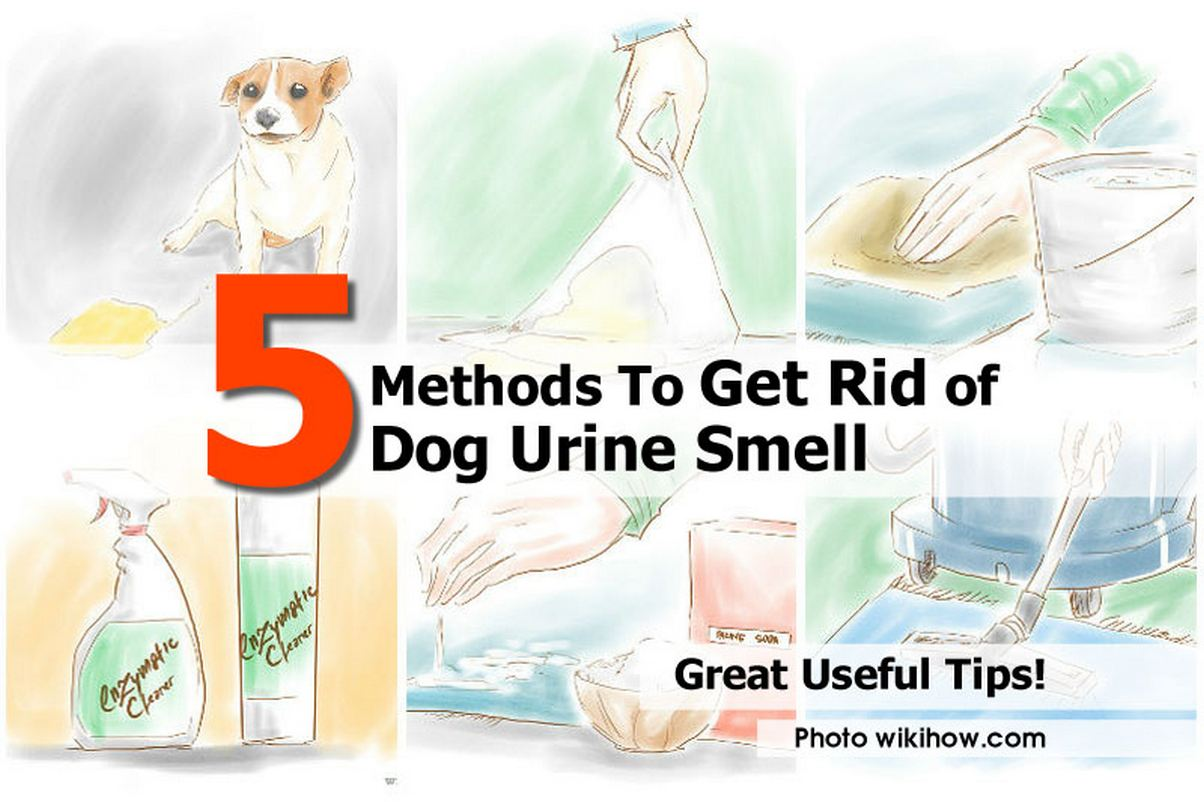 How to get rid of fishy smell from discharge x3 how to for My urine smells like fish