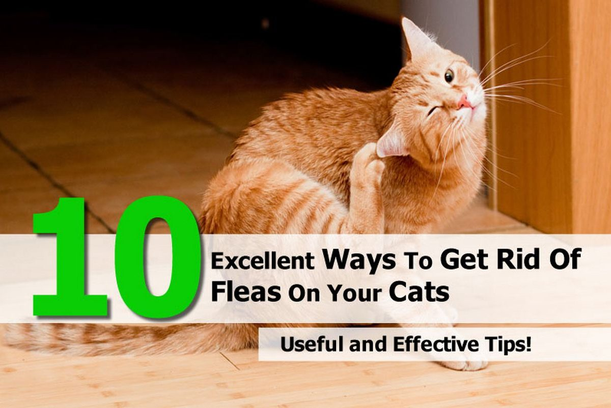 A Natural Way To Get Rid Of Fleas On Cats