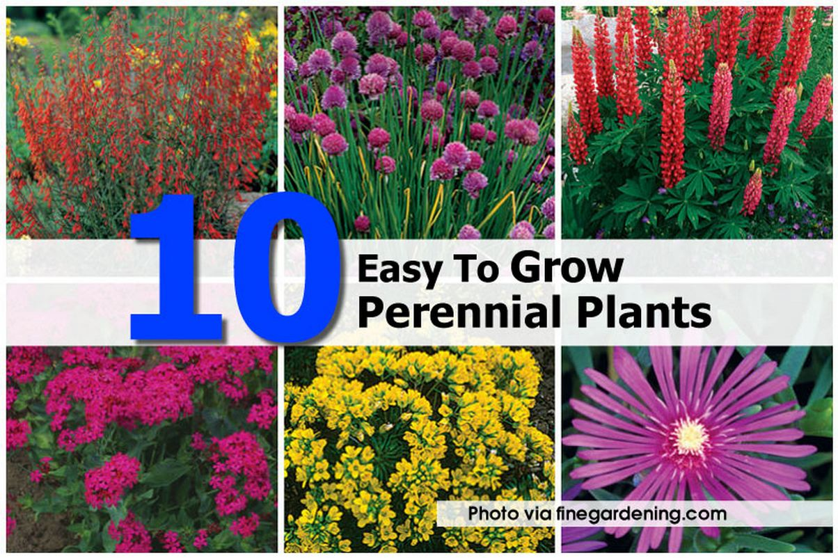 Garden design garden design with easy to grow perennial plants with garden design with easy to grow perennial plants with modern garden design from hometipsworld mightylinksfo Image collections