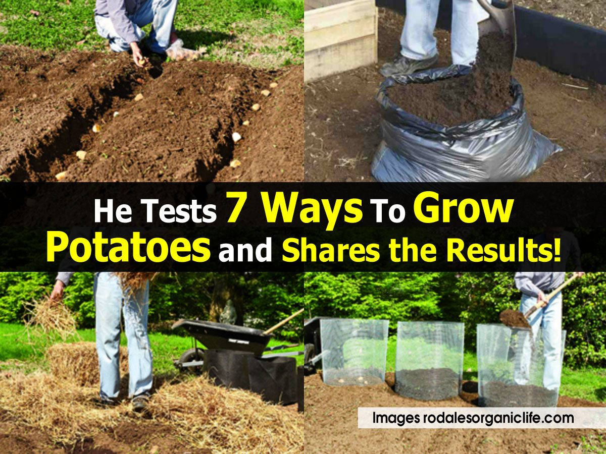 He tests 7 ways to grow potatoes and shares the results for Different ways to prepare potatoes