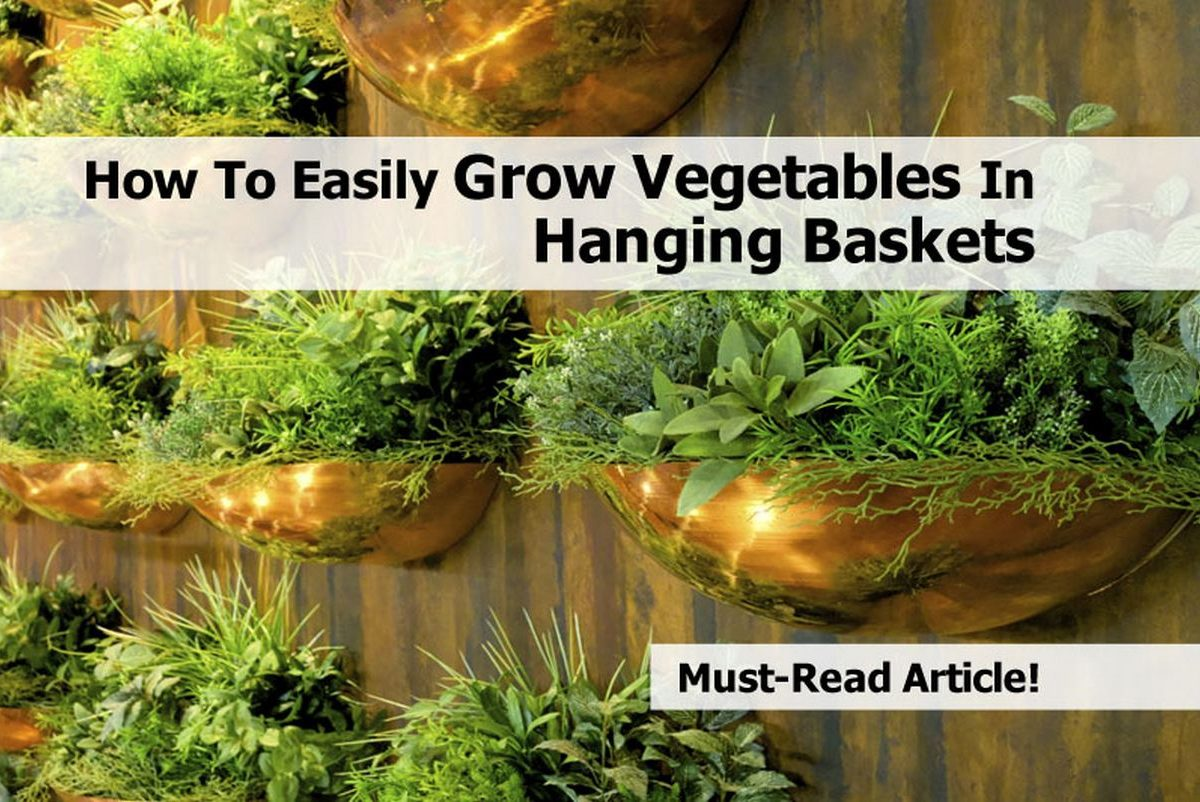 How to easily grow vegetables in hanging baskets - Growing vegetables in a small space concept ...