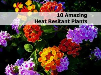10 amazing heat resistant plants - Heat tolerant plants keeping gardens alive ...