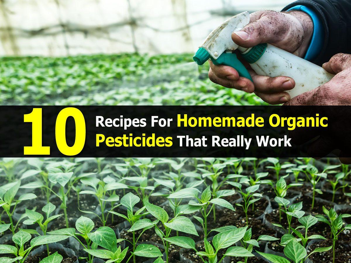 10 recipes for homemade organic pesticides that really work - Homemade organic pesticides ...