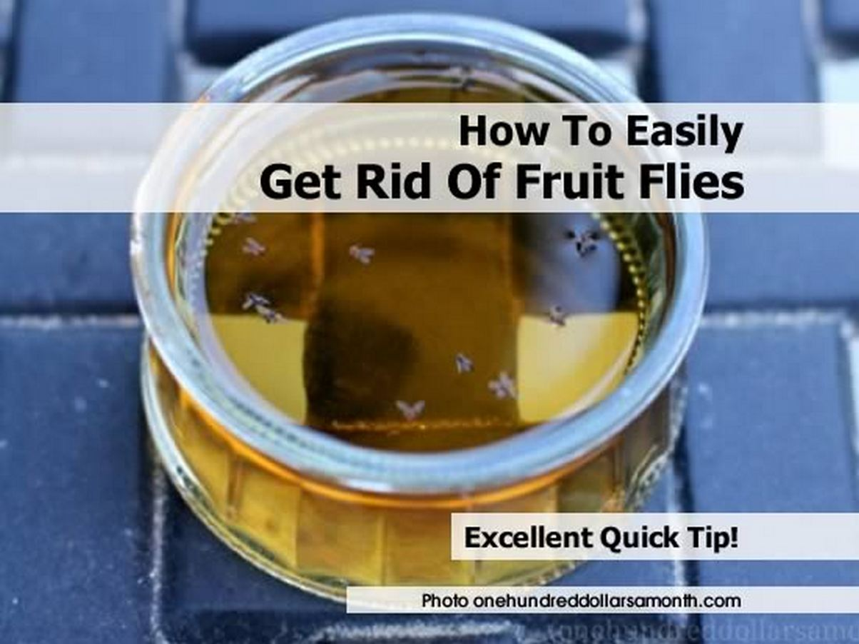 how-to-get-rid-of-fruit-flies-by-onehundreddollarsamonth-com