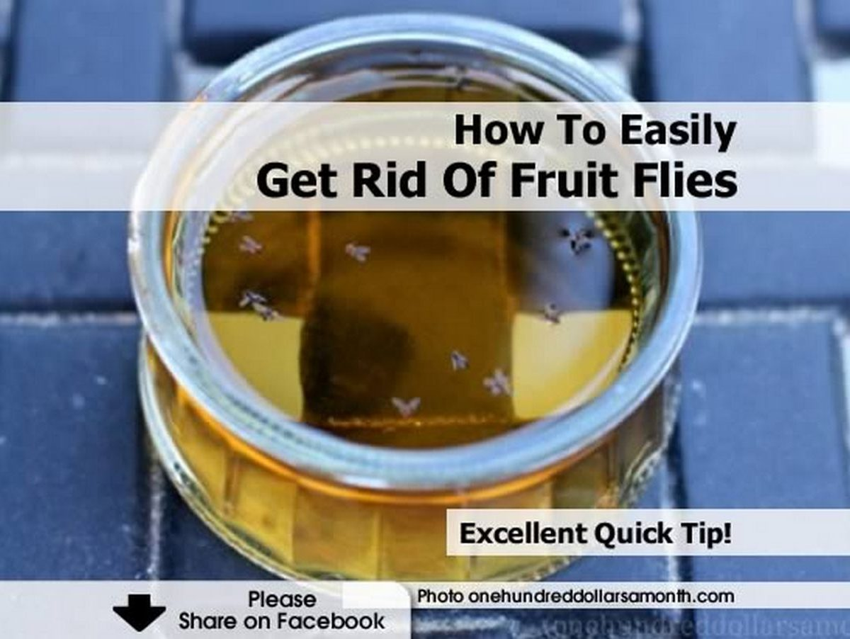 how to easily get rid of fruit flies. Black Bedroom Furniture Sets. Home Design Ideas