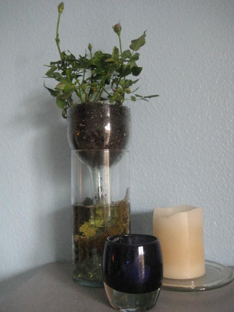 How To Make A Handy Self Watering Wine Bottle Planter