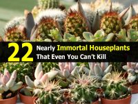 22 Nearly Immortal Houseplants That Even You Can't Kill