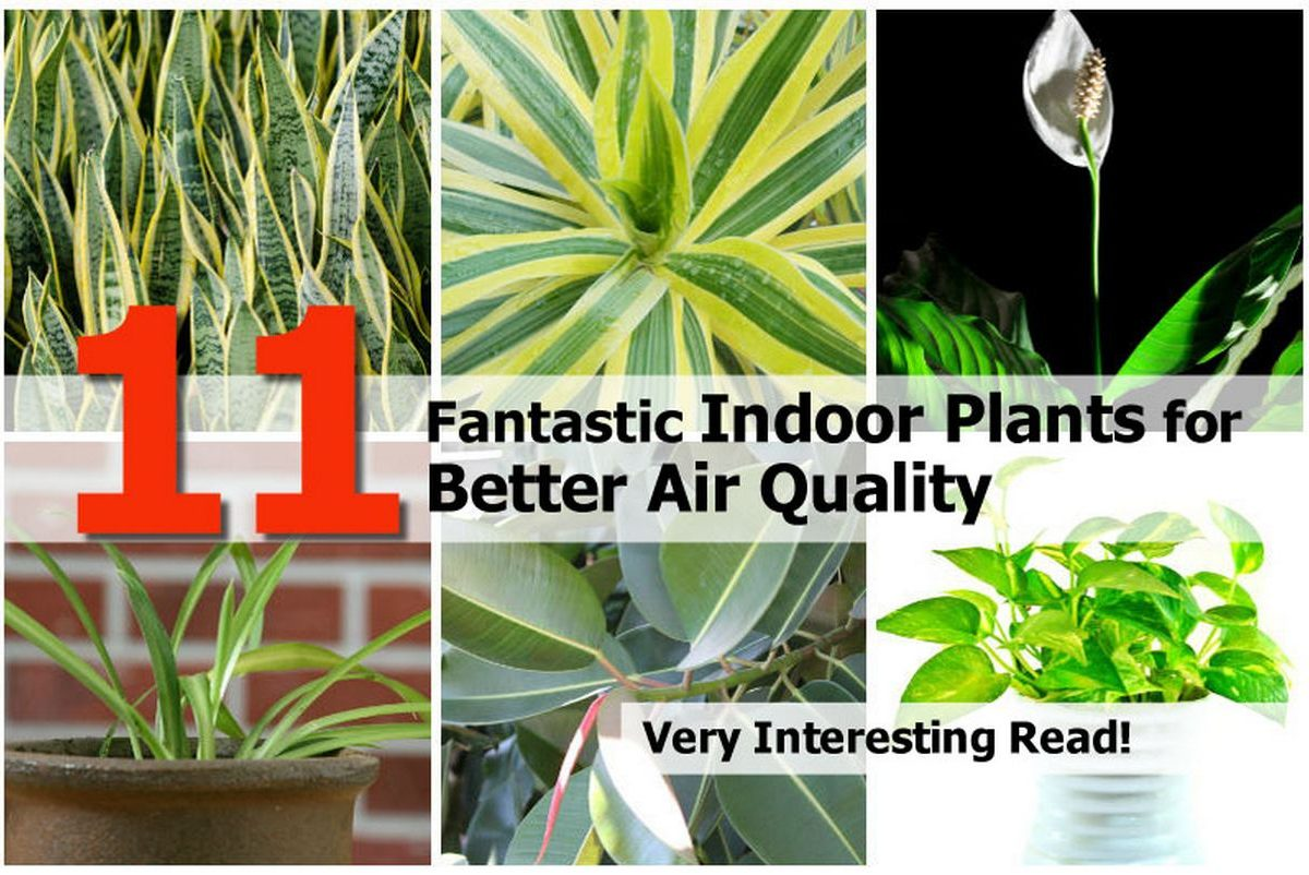 11 fantastic indoor plants for better air quality for Best plants to improve air quality