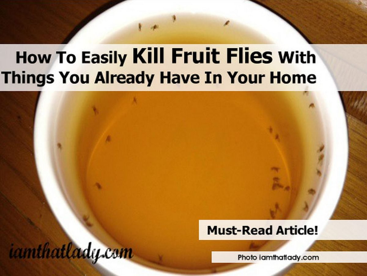 how to easily kill fruit flies with things you already have in your home. Black Bedroom Furniture Sets. Home Design Ideas