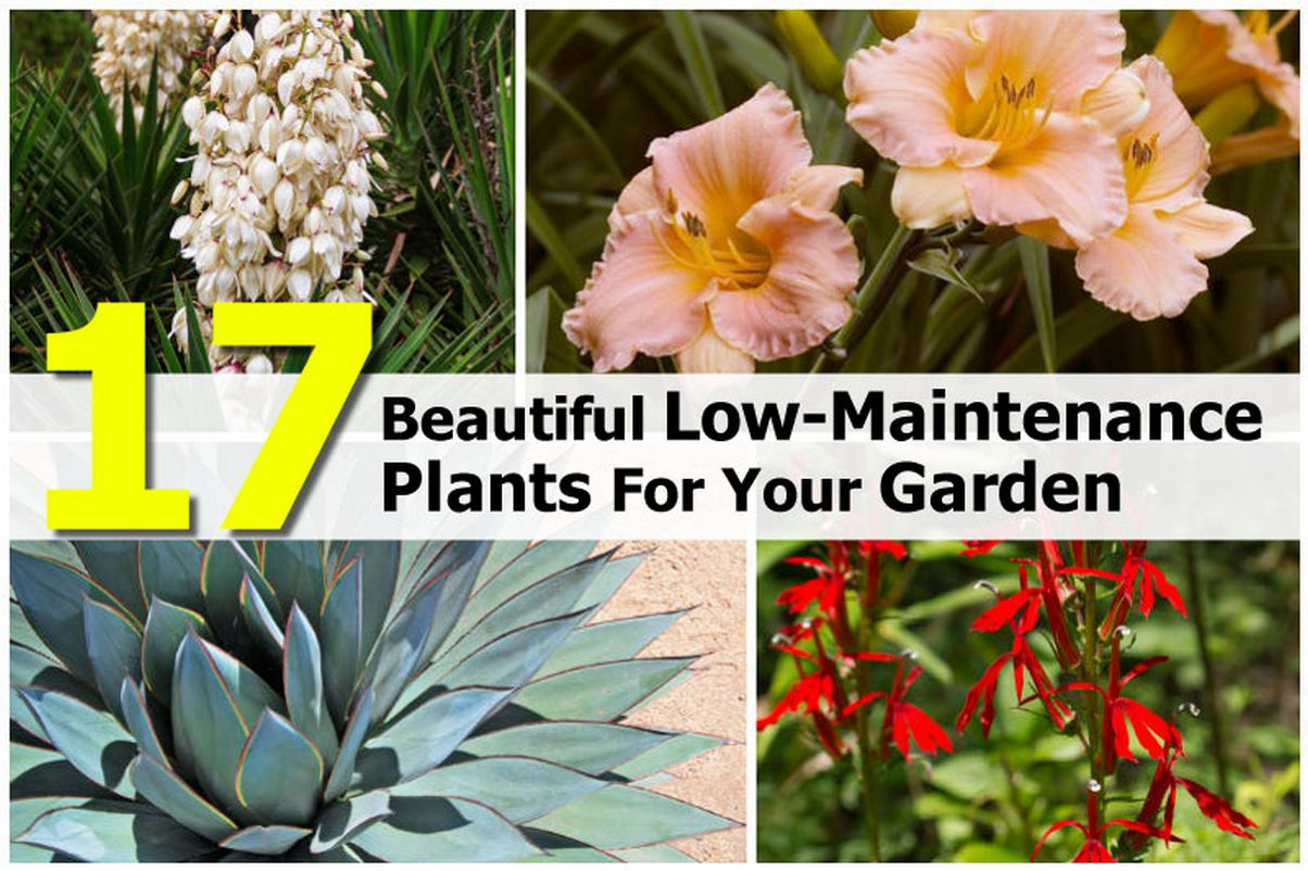 ... Garden Design With Beautiful LowMaintenance Plants For Your Garden With  Perennial Plants From Hometipsworld.com