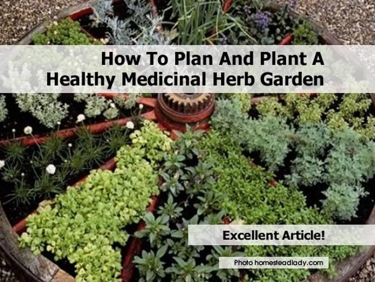 How to plan and plant a healthy medicinal herb garden for How to layout plants in a garden