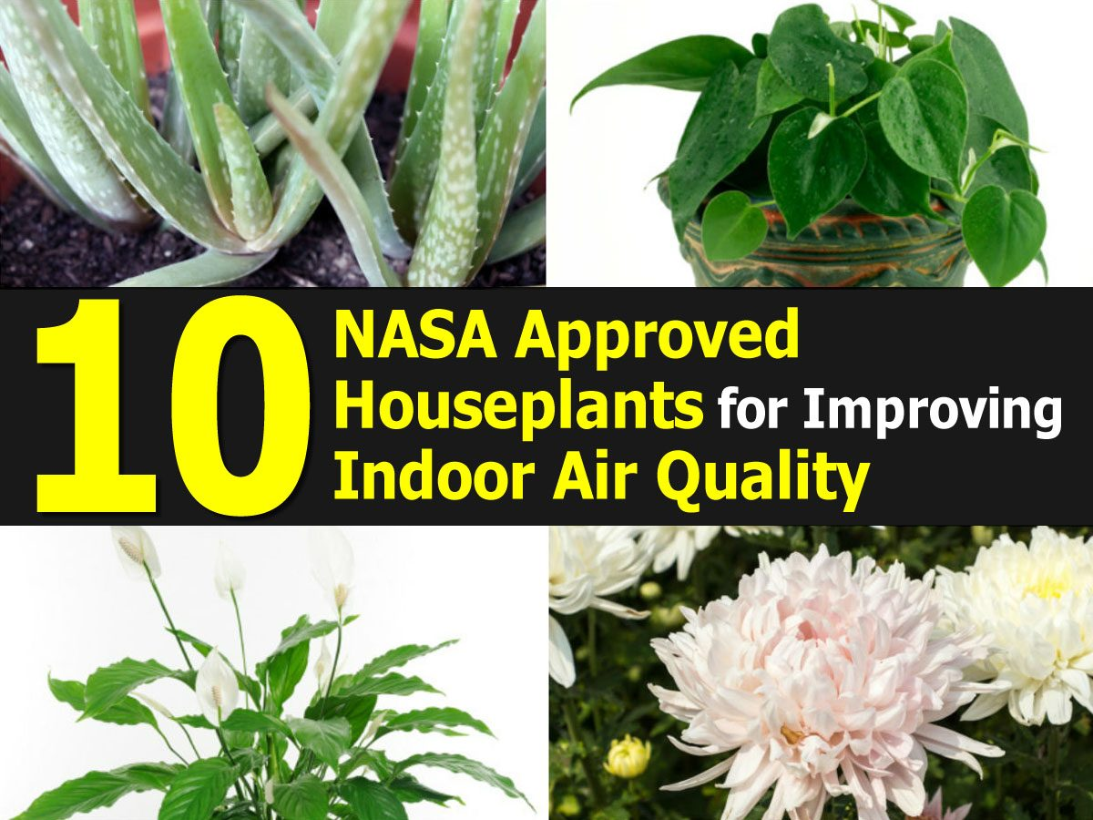 Top 10 NASA Approved Houseplants for Improving Indoor Air ...