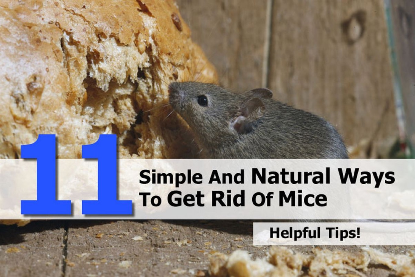 Natural Ways To Get Rid And Repel Mice