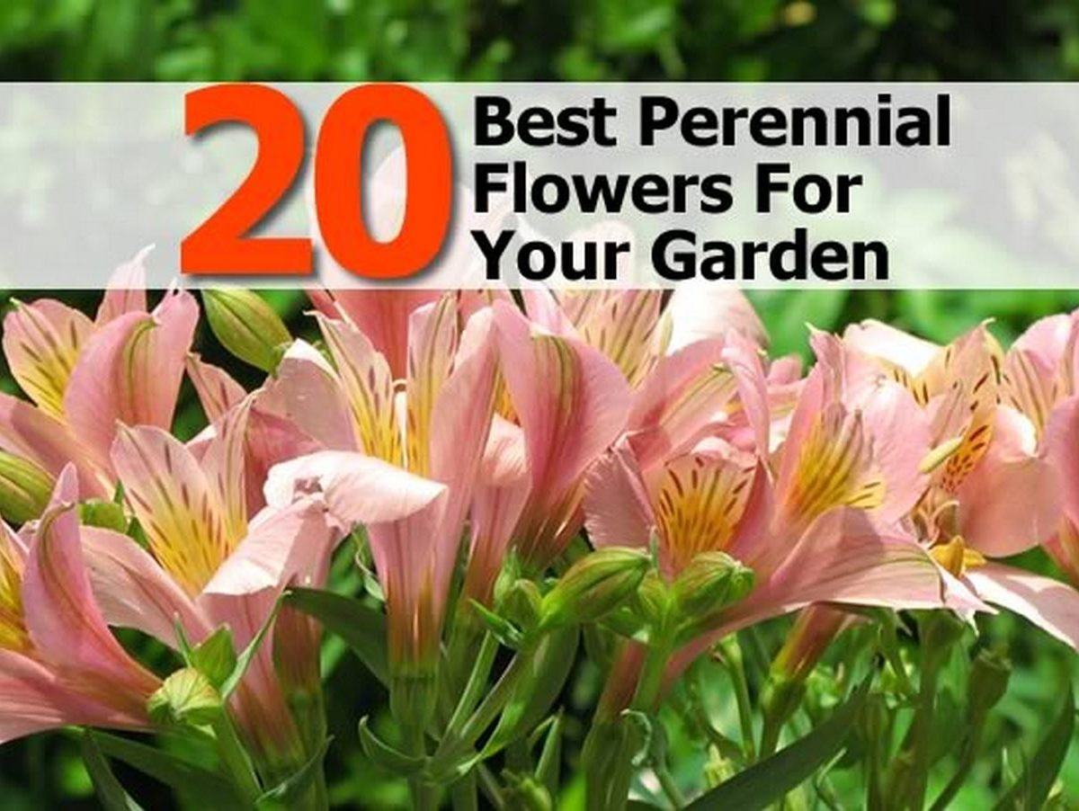 20 best perennial flowers for your garden for Best flowers for backyard gardens