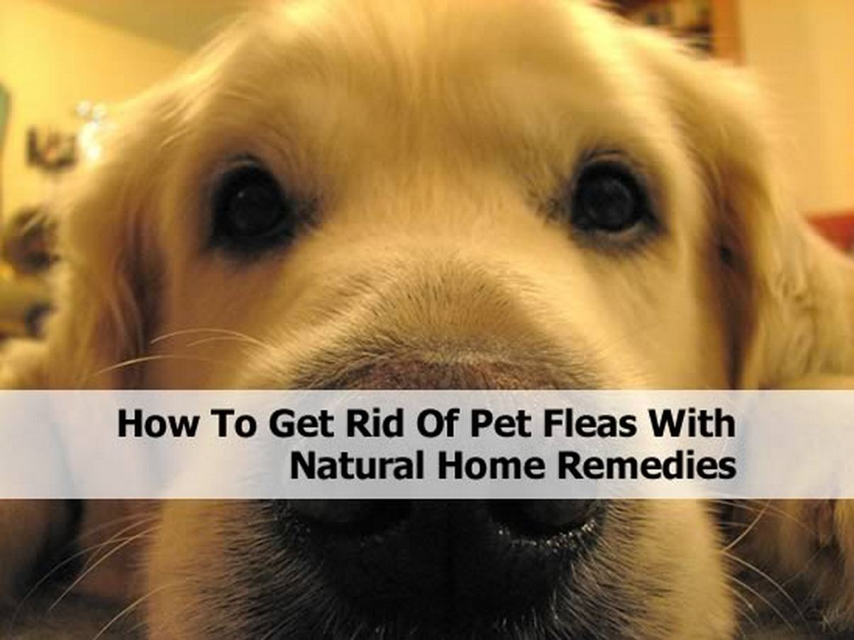 how to get rid of pet fleas with natural home remedies. Black Bedroom Furniture Sets. Home Design Ideas